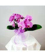 Pianta fiorita di orchidea lilla in vaso di ceramica bianca a boccia
