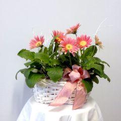 Cestino di vimini piante multicolori di primula in fiore