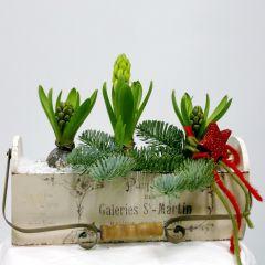 Cassetta vintage con manico posteriore per fissaggio a muro e bulbi di giacinto bianco