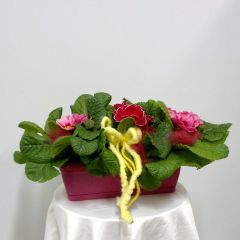 Wicker basket of multicolor flowery primroses