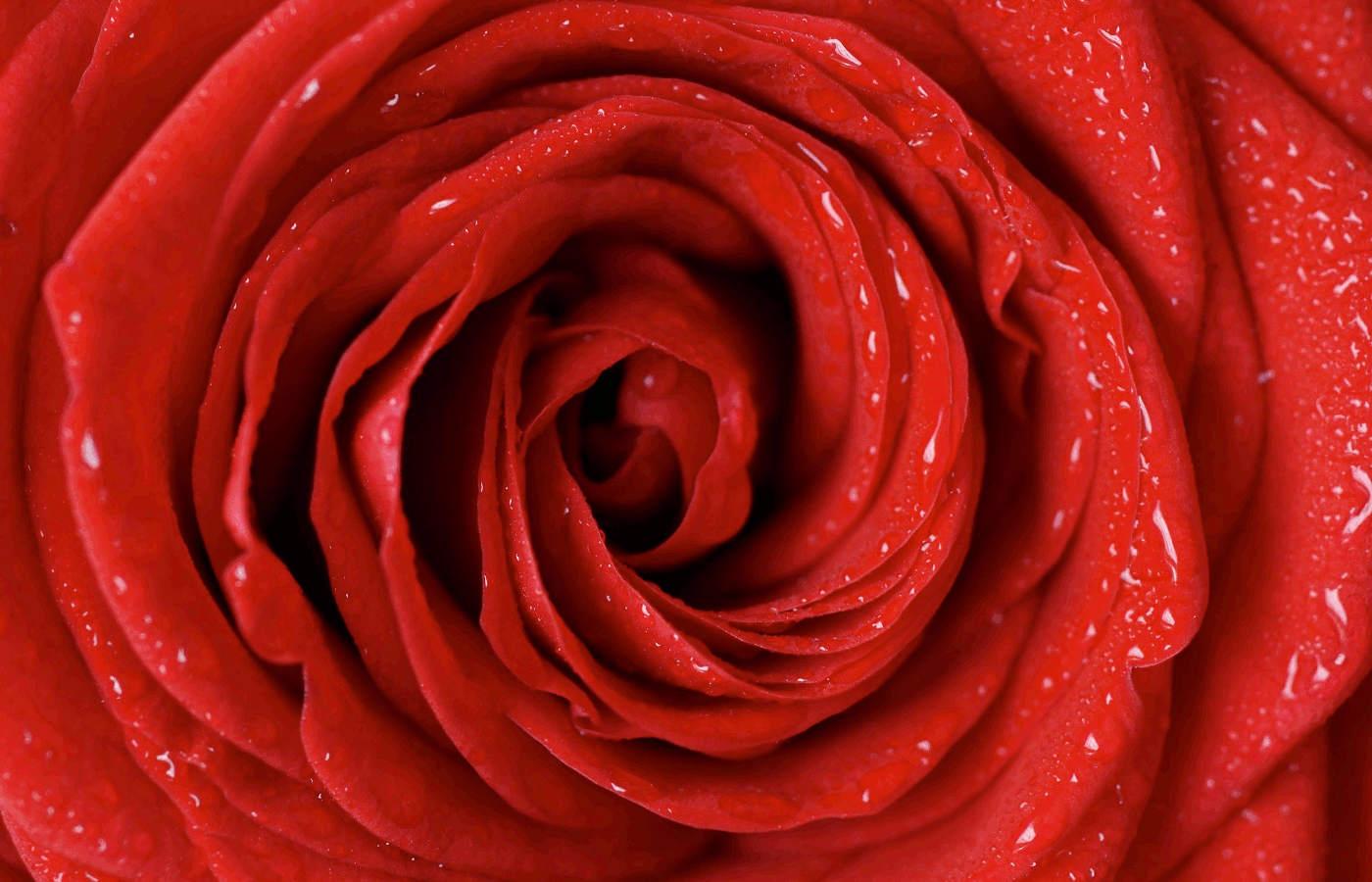 San Valentino e la Rosa